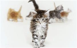 Preview wallpaper Cute kittens walking