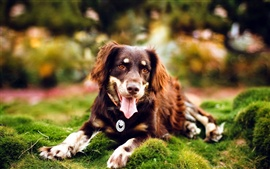 Long-haired dog in the grass