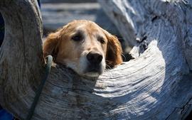 Le chien est à la recherche de quelque chose