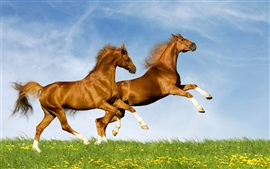 Preview wallpaper Two horses