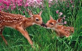 Dos ciervos sika en los arbustos