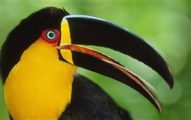 Preview wallpaper Birds of Toucans