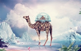 Preview wallpaper Creative pictures, camel India Paradise
