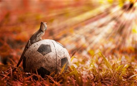 Preview wallpaper Football with lizard