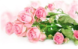 Preview wallpaper Fresh pink roses