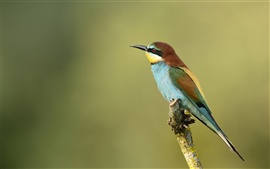 Kingfisher telephoto photography