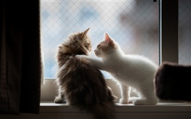 Preview wallpaper Kitten greeting