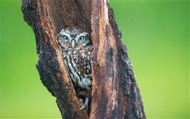 Preview wallpaper Owl in tree