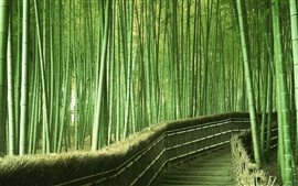 Preview wallpaper Promenade in the bamboo forest