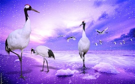 Preview wallpaper Red-crowned crane paradise