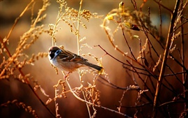 Preview wallpaper Sparrows in the fall