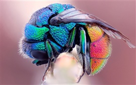 The colorful colors of the flies