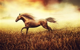 The horse runs in a cornfield