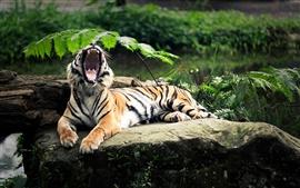 O rugido do tigre
