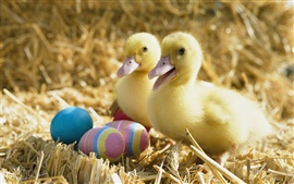 Two little ducks and Easter eggs