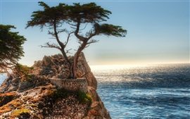 Coast rock cliff tree