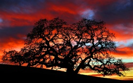 Preview wallpaper Dusk under the tree silhouette beauty