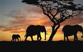 Elefantes no por do sol