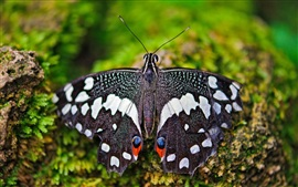 Preview wallpaper Insect butterfly macro photography