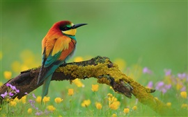 Preview wallpaper Kingfisher wildflowers deadwood