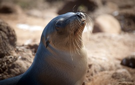 Lovely close-up of sea lion
