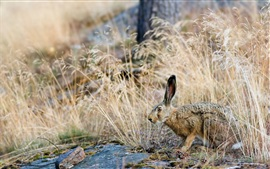 Preview wallpaper Natural bushes hare close-up