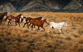 Os cavalos nas pastagens