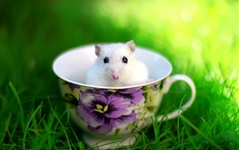 Preview wallpaper The lovely mice in the teacup