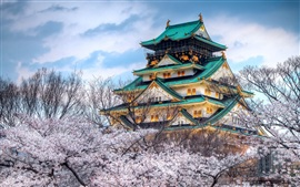 Preview wallpaper The temple of the cherry blossom season in Japan