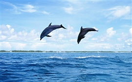 Preview wallpaper Two dolphins jumping