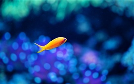Preview wallpaper A yellow fish in the water, the fuzzy blue background
