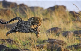 Cheetah predation rapid jumping