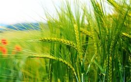 Зерна преследует боке съемки крупным планом