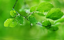 Green theme background, drops of water on the leaves
