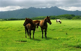 Preview wallpaper Horse grazing on the grasslands