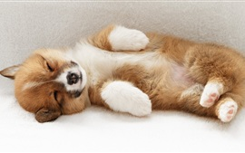Preview wallpaper Puppy sleeping