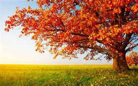 Preview wallpaper Red tree leaves in autumn on the prairie