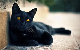 Preview wallpaper Street black cat eyes