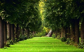 Preview wallpaper The natural summer forest green grass path