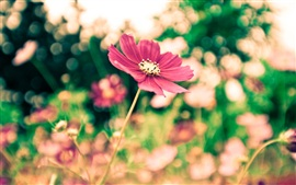 Preview wallpaper The park red flowers blur photography