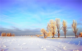 미리보기 배경 화면 겨울 밀 필드의 두꺼운 눈