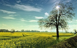 Vegetable rape flowers and tree sunrise landscape