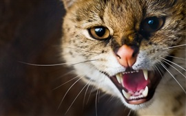 Preview wallpaper Wildcat whiskers teeth close-up