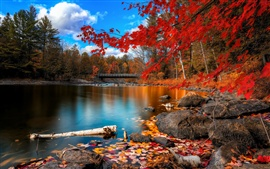 Autumn river, wooden bridge, woods and red leaves