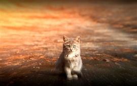 Cat глаз, улица закат