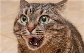 猫惊讶的表情特写 壁纸图片