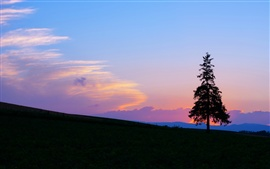 Preview wallpaper Evening sunset, mountain and tree silhouette