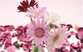 Preview wallpaper Red, white, pink, gerbera flowers close-up