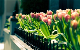 Preview wallpaper Spring tulips flower close-up, blurred photography