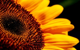 Vorschau des Hintergrundbilder Sunflower flower close-up High Definition